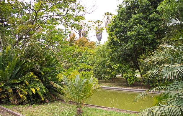 ajuda_botanico (3 of 41)