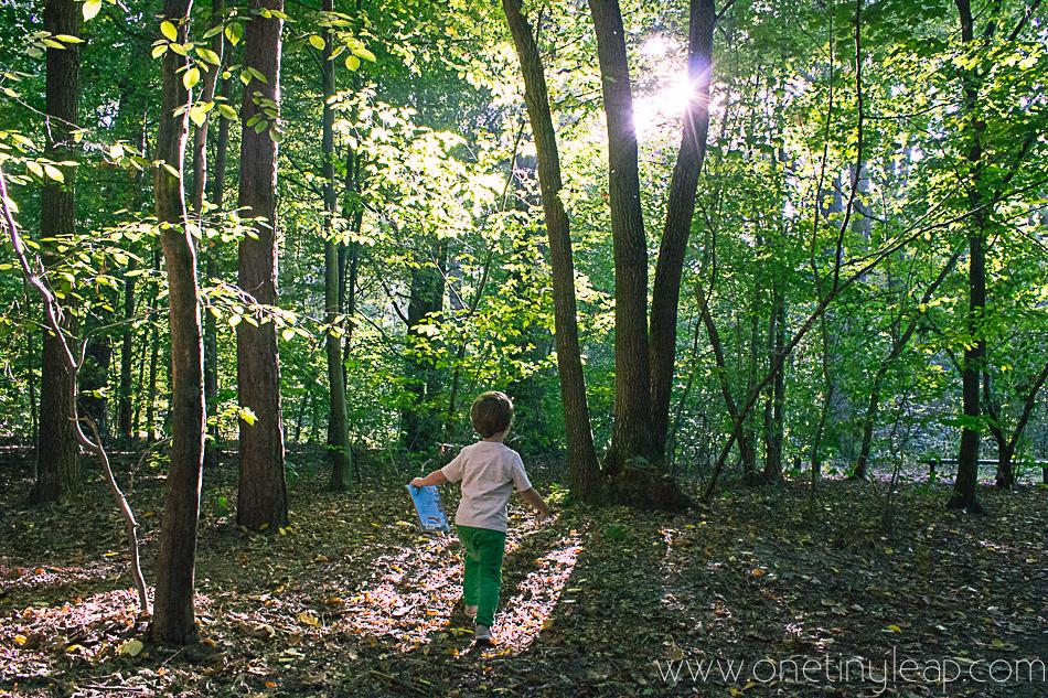 woods-1-3