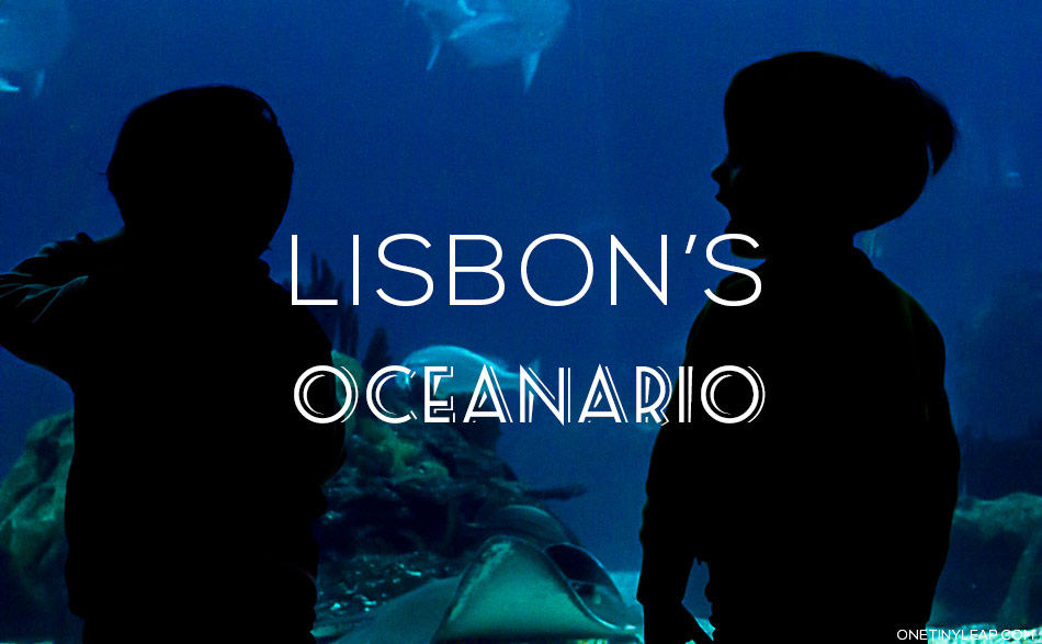 Oceanario Lisboa via onetinyleap all rights reserved