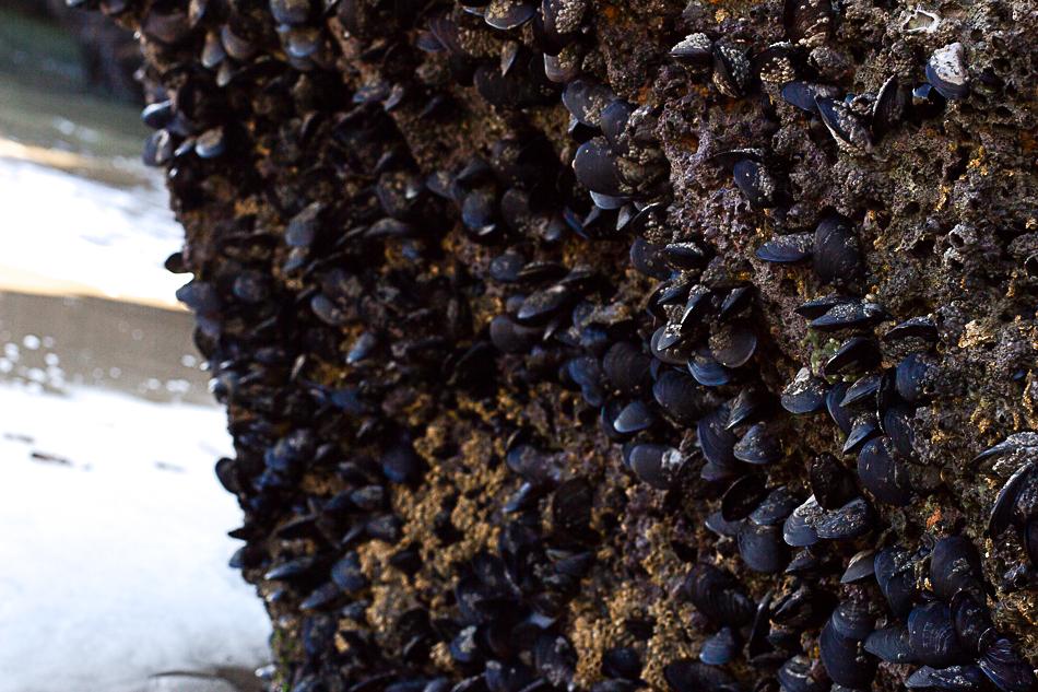 Cascais | One Tiny Leap