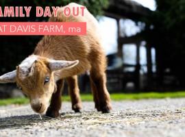 davis farm massachussets via @onetinyleap