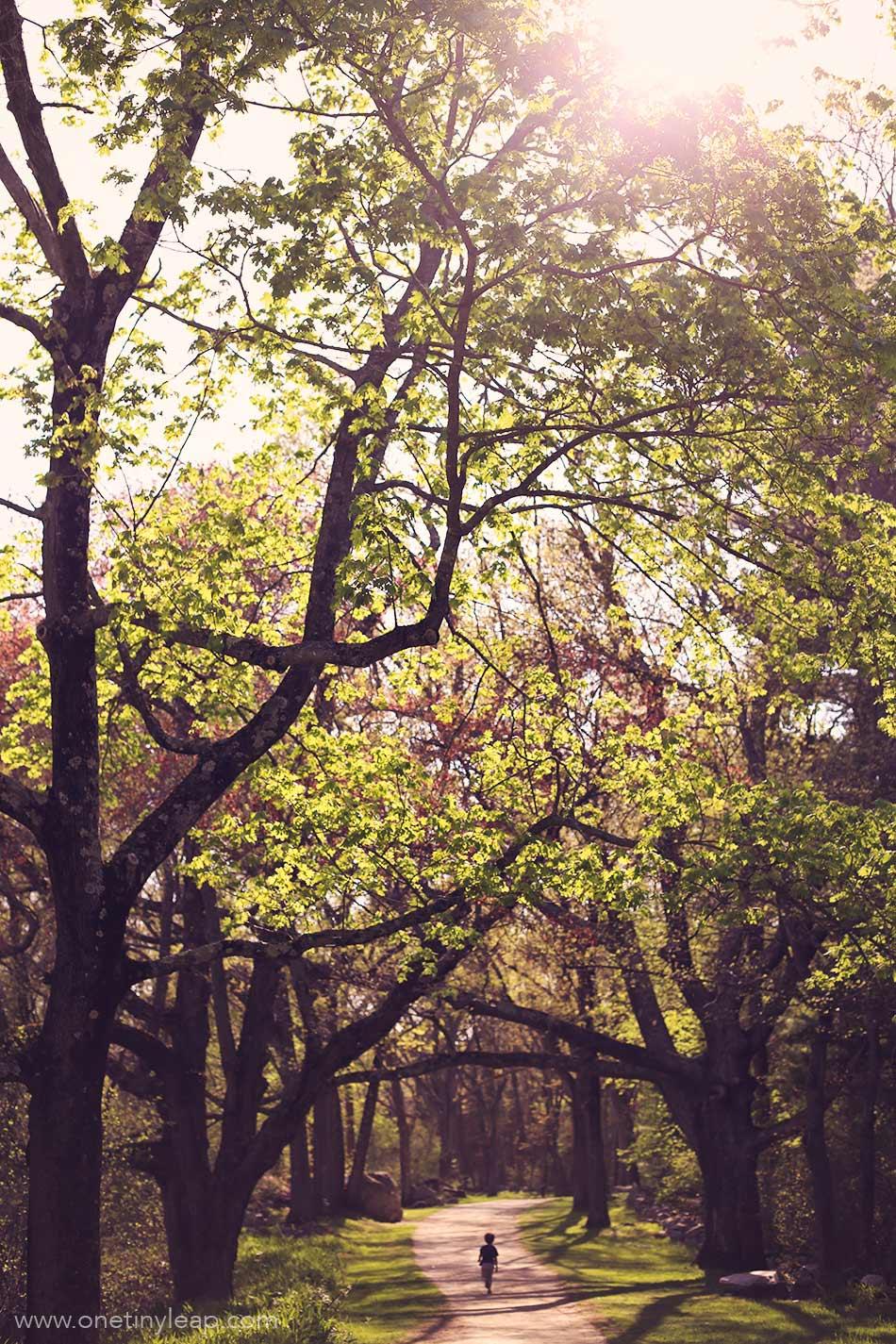 lexington state park, mass