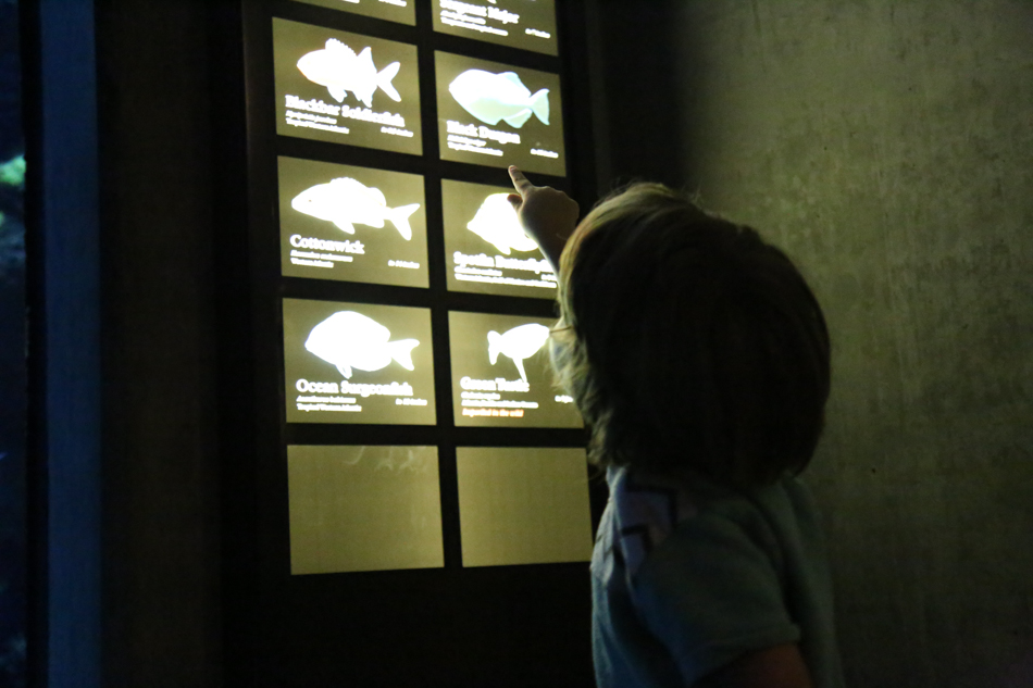 Tennessee Aquarium chattanoooga