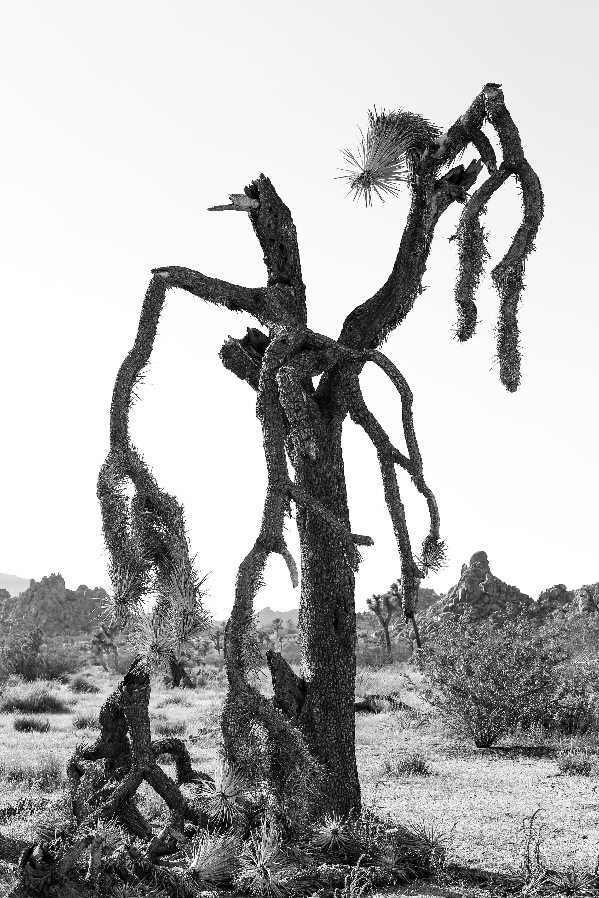 joshua_tree-6